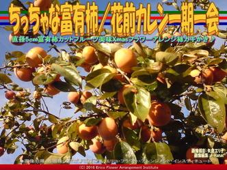 ちっちゃな富有柿/花前カレン一期一会画像03