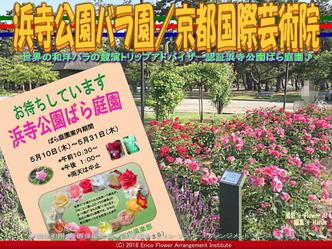 浜寺公園バラ園(3)/京都国際芸術院画像02 ▼画像クリックで640x480pxlsに拡大@エリ子花前カレン