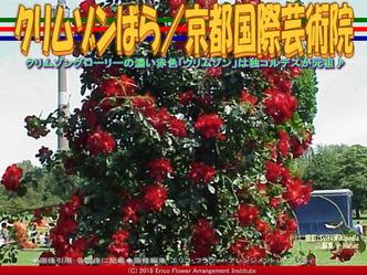 クリムゾンばら(3)/京都国際芸術院画像01 ▼画像クリックで640x480pxlsに拡大@エリ子花前カレン
