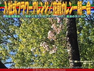 入社式フラワーアレンジ(4) /花前カレン一期一会画像02