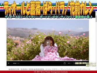ディオールと薔薇(3)/花前カレン画像03