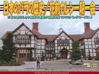 日本のバラの歴史(2)/花前カレン画像03