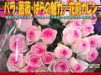 バラ・薔薇・ばらの魅力/花前カレン画像03