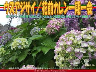 ウズアジサイ/花前カレン一期一会画像02