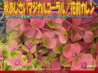 秋あじさいマジカルコーラル/花前カレン画像02