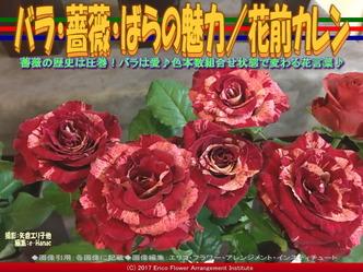 バラ・薔薇・ばらの魅力(2)/花前カレン画像01