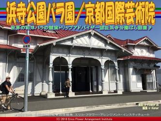 浜寺公園バラ園(5)/京都国際芸術院画像01▼画像クリックで640x480pxlsに拡大@エリ子花前カレン