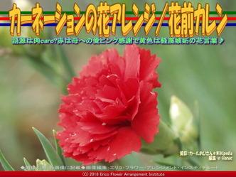 カーネーションの花アレンジ(7)/花前カレン画像02▼画像クリックで640x480pxlsに拡大@エリ子花前カレン