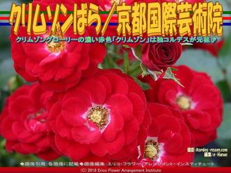 クリムゾンばら(6)/京都国際芸術院画像02 ▼画像クリックで640x480pxlsに拡大@エリ子花前カレン