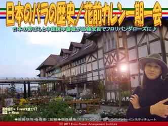 日本のバラの歴史(3)/花前カレン画像03