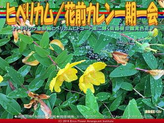 ヒペリカム/花前カレン一期一会画像02