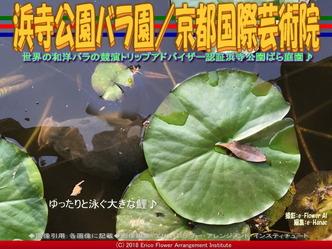 浜寺公園バラ園(8)/花前@京都国際芸術院画像01▼画像クリックで640x480pxlsに拡大@エリ子花前カレン