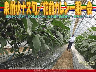泉州水ナス旬(3)/花前カレン一期一会画像02