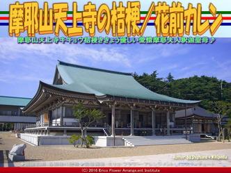 摩耶山天上寺の桔梗/花前カレン画像01