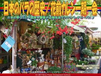 日本のバラの歴史(5)/花前カレン画像02