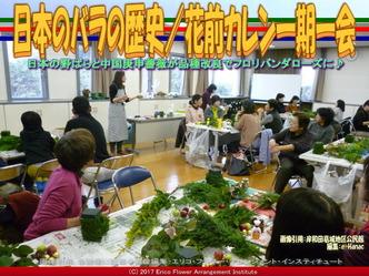 日本のバラの歴史(8)/花前カレン画像02