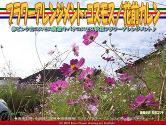 コスモス・フラワーアレンジ(3)/花前カレン画像01
