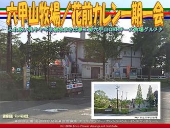 六甲山牧場/花前カレン一期一会画像01