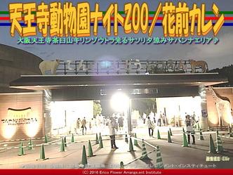 天王寺動物園ナイトZOO/花前カレン画像02