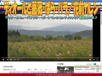 ディオールとバラ(5)/花前カレン画像03