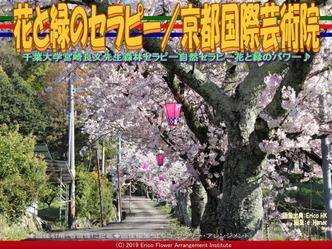 花と緑のセラピー(2)/京都国際芸術院画像01 ▼画像クリックで640x480pxlsに拡大@エリ子花前カレン