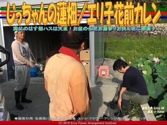 じっちゃんの蓮畑(9)/エリ子花前カレン画像01 ▼画像クリックで640x480pxlsに拡大@エリ子花前カレン
