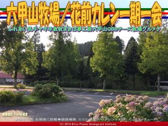 六甲山牧場/花前カレン一期一会画像03