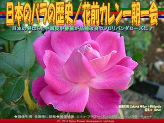 日本のバラの歴史(4)/花前カレン画像03