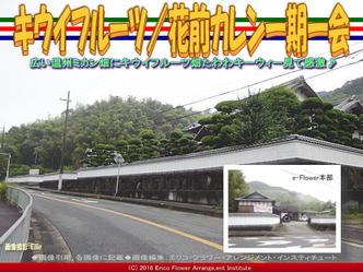 キウイフルーツ/花前カレン一期一会画像02