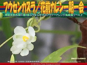 フウセンカズラ/花前カレン一期一会画像03