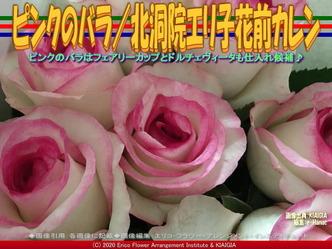 ピンクのバラ(2)/北洞院エリ子花前カレン画像01 ▼画像クリックで640x480pxlsに拡大@北洞院エリ子花前カレン