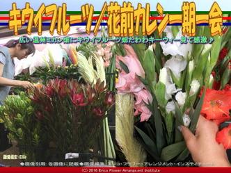キウイフルーツ/花前カレン一期一会画像01