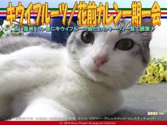 キウイフルーツ/花前カレン一期一会画像03