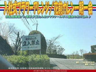 入社式フラワーアレンジ(3) /花前カレン一期一会画像02