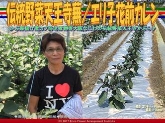伝統野菜天王寺蕪(5)/エリ子花前カレン画像01
