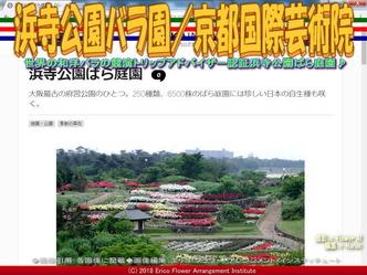 浜寺公園バラ園(2)/京都国際芸術院画像02 ▼画像クリックで640x480pxlsに拡大@エリ子花前カレン
