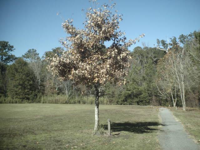 Park  a tree
