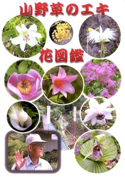 山野草のエキ 花図鑑 表紙