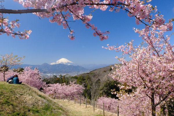 おおい ゆめ の 里 おおいゆめの里案内図 - 神奈川県大井町ホームページ