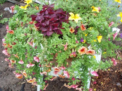 Sept22_planter