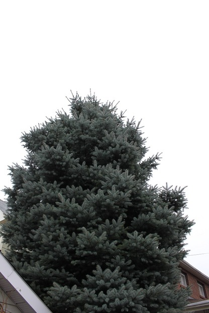 Nov23_tree