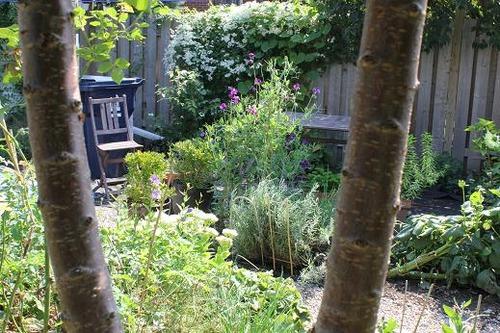 Sept11_garden