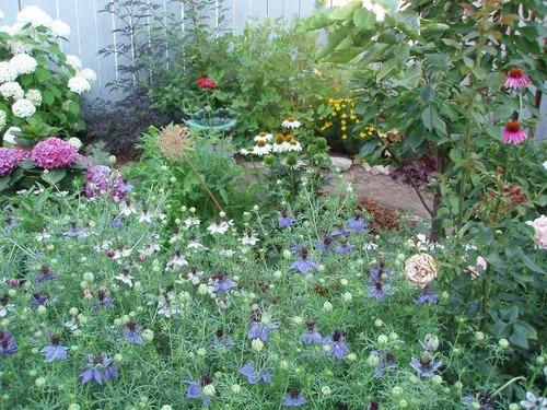 July11_garden