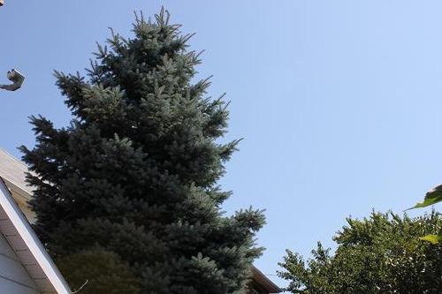 Aug24_tree
