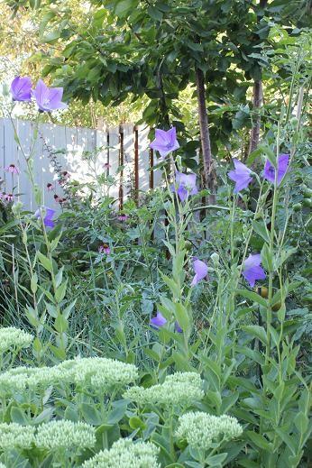 Aug11_garden
