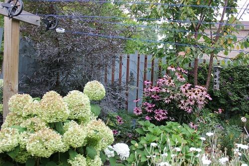 Aug23_garden
