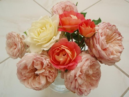 Aug6_roses