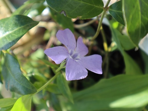 May20 (3)periwinkle