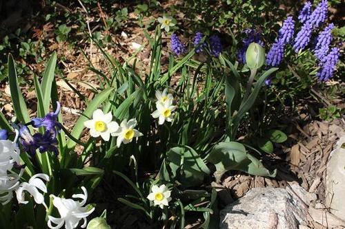 May4_bulbs2