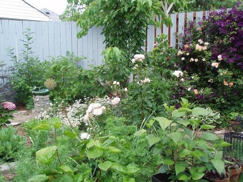 June24_garden1